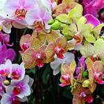 Интересные факты и сведения об орхидеях