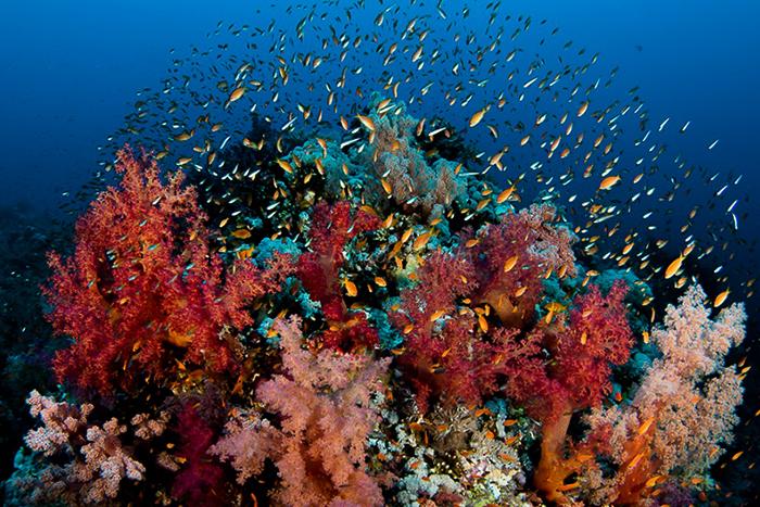 Рыба в Красном море