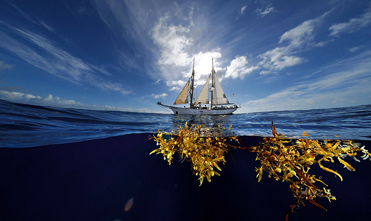 Корабль в Саргассовом море