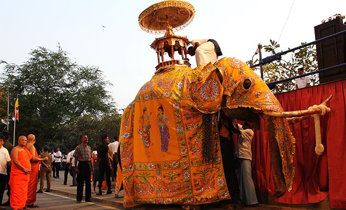 Слон в Индии
