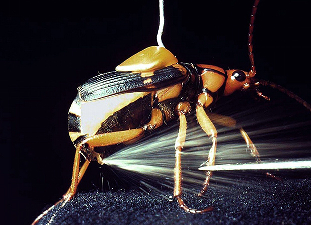 Защитный механизм жука