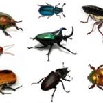 Самые интересные факты о жуках
