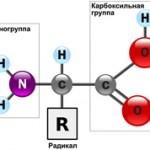 Интересные факты об аминокислотах