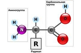 aminoava