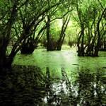 Интересные и необычные факты о болотах