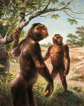 Человекоподобные обезьяны