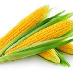 Самые интересные факты про кукурузу