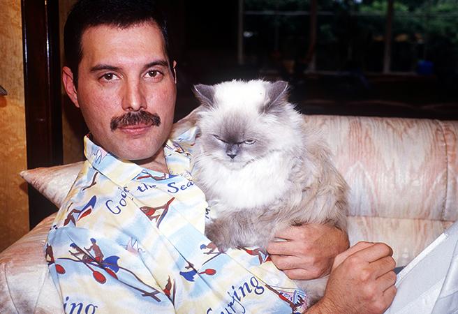 Фредди с кошкой