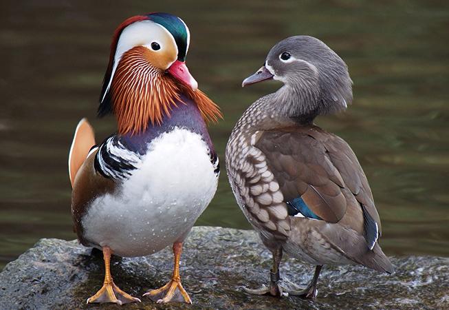 Самец и самка