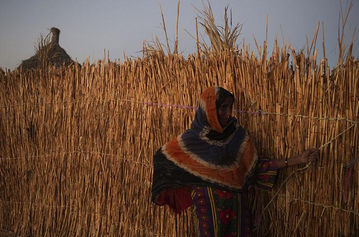 Сельское хозяйство в Чаде