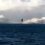Интересные факты и сведения о Беринговом море