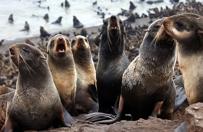 Группа ластоногих