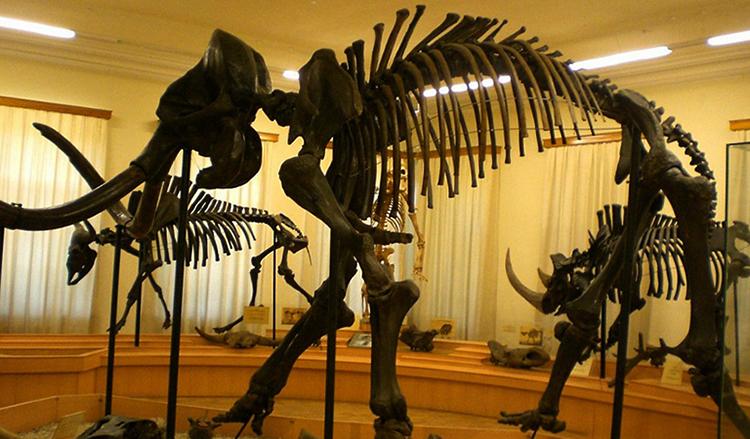 Тюменский мамонт