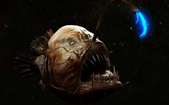 Рыба-удильщик