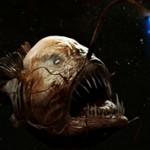Интересные факты о рыбе удильщик
