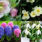 Интересные факты про первоцветы