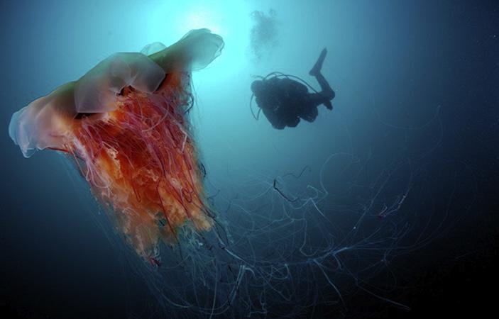 Подводный мир Японского моря