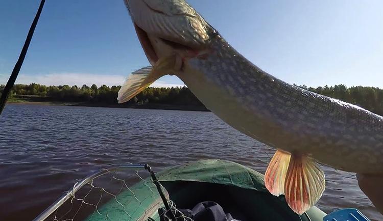 Рыба в Иртыше