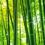 Интересные факты и сведения про бамбук