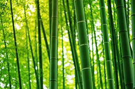 bambooava