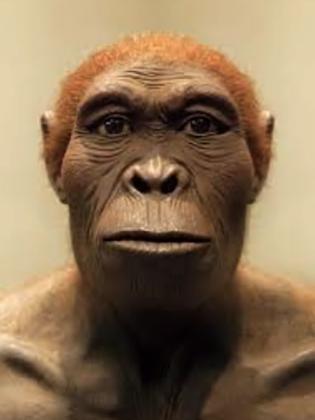 Лицо человека умелого